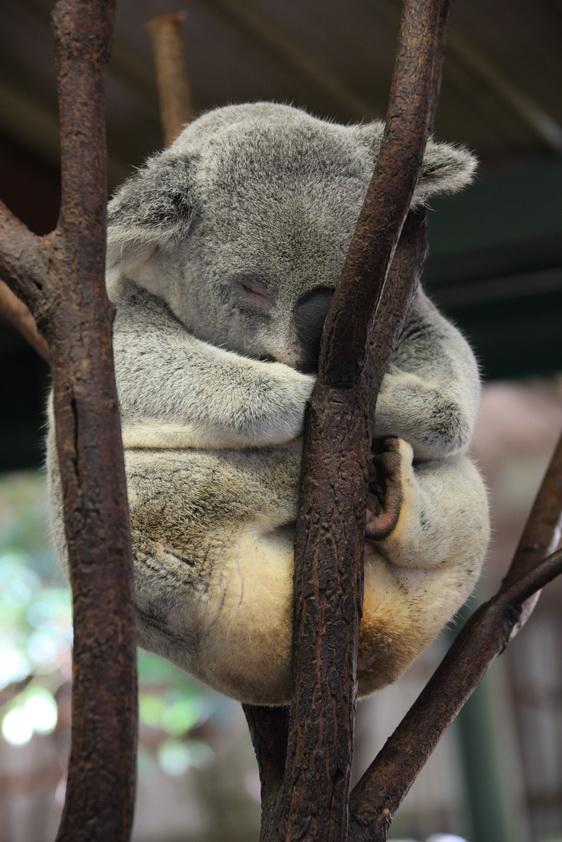 澳大利亚可爱的土著动物