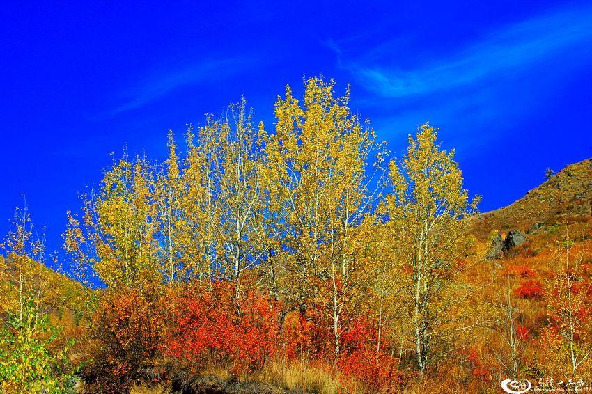 秋天的布尔津,沿着额尔齐斯河畔前行,那到处都是一派北欧
