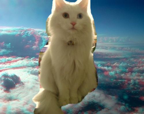 壁纸 动物 狗 狗狗 猫 猫咪 小猫 桌面 500_395