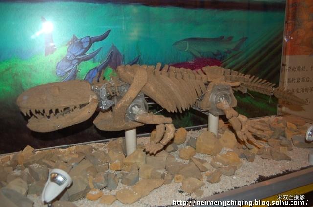 带小孙女参观古动物博物馆