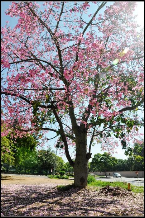 整个下午坐在后院的橘子树下看蚂蚁搬家 出门,和同事撞见这棵树,在