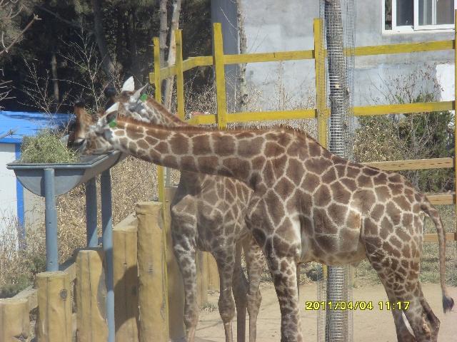 栖霞野生动物园