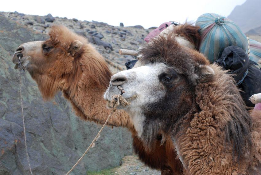 动物高兴沉思照片