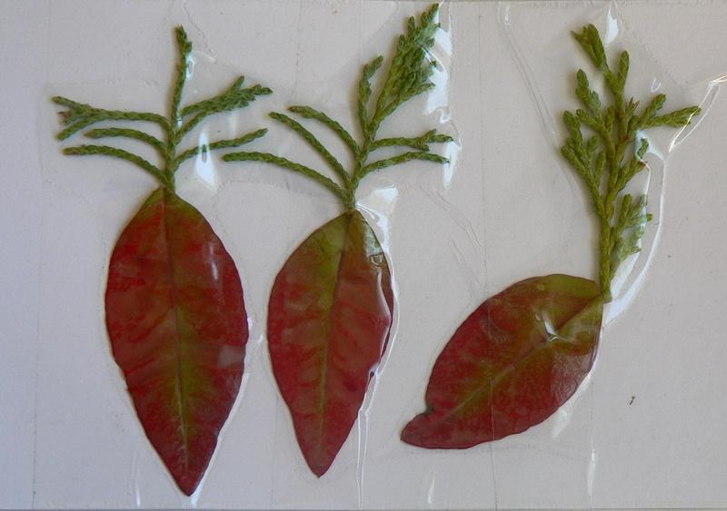 做手工1):树叶画之植物篇