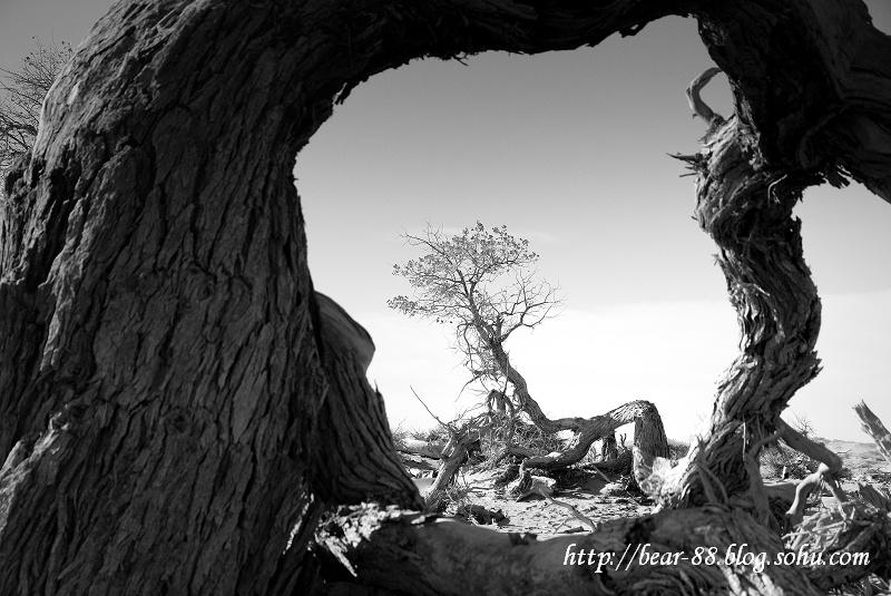 枯木寻禅--额济纳怪树林