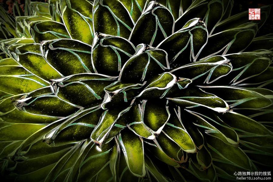 最有特色的除了热带雨林类植物和巴托尔迪式盆景(bartholdi)之外,便是