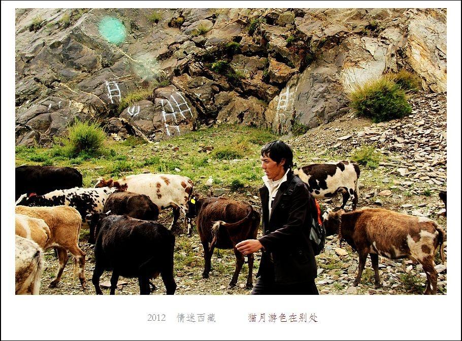 西藏/二没有自知之明的小羊