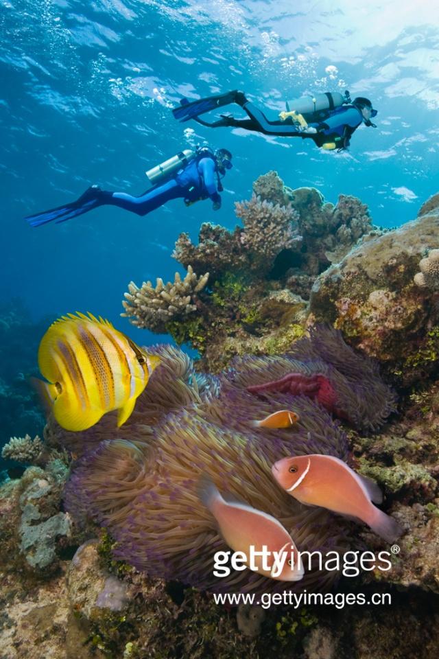 在落潮时,部分珊瑚礁露出水面形成珊瑚岛.