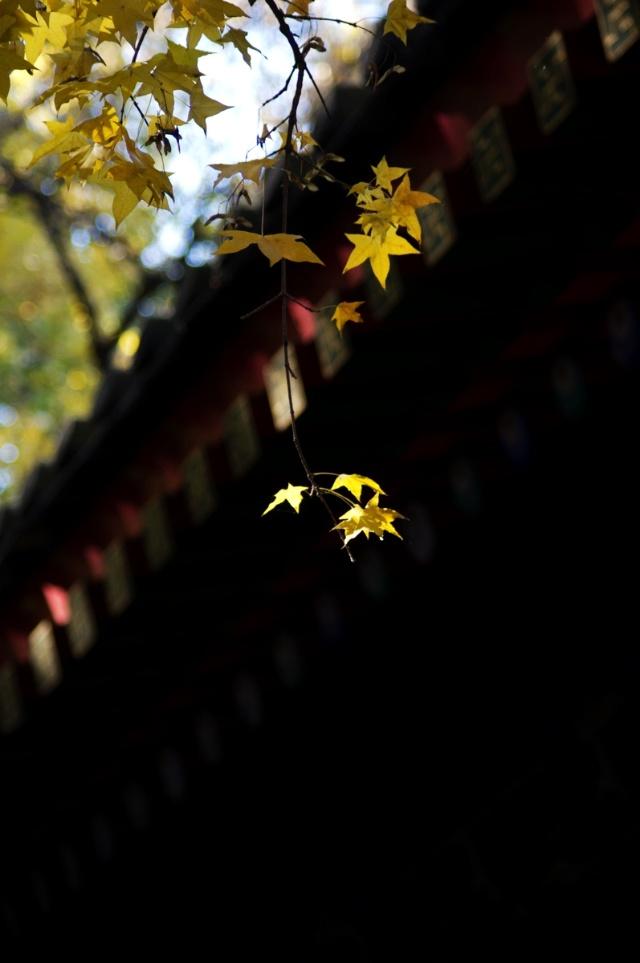 怎么折秋天的树叶简单折法图解