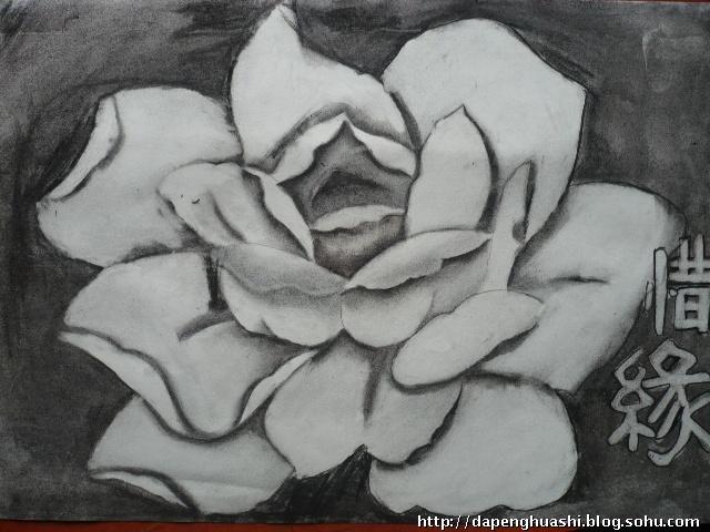 临摹   插图玫瑰花素描花时尚花月饼   素描玫瑰花纹身手稿图片   铅笔画
