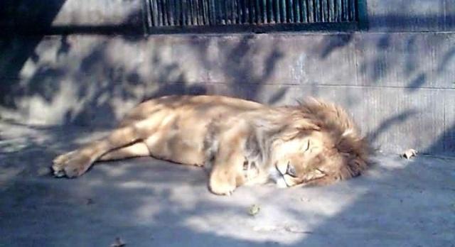第一站:成都动物园