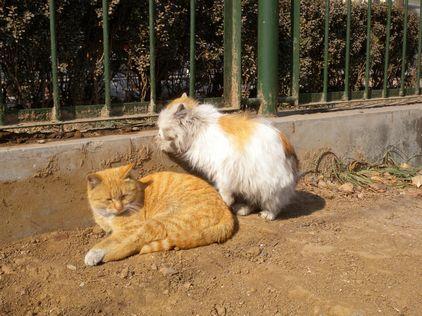 向山东泰山小动物保护协会致敬!
