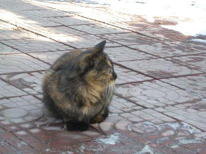 最后找到泰山小动物保护协会