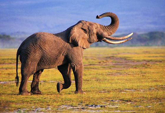 非洲动物主题墙