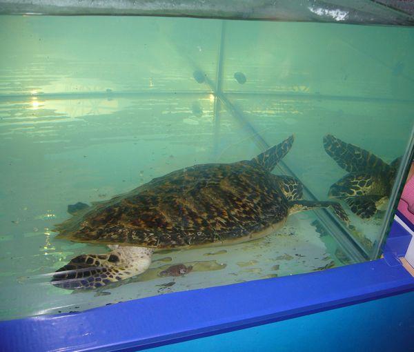 海洋生物科普展