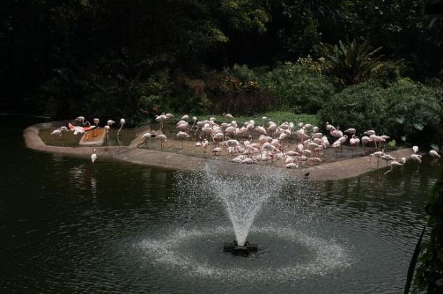 新加坡民丹岛亲子游——裕廊飞禽公园