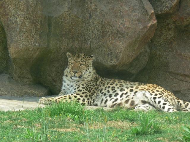 生态动物园(3)