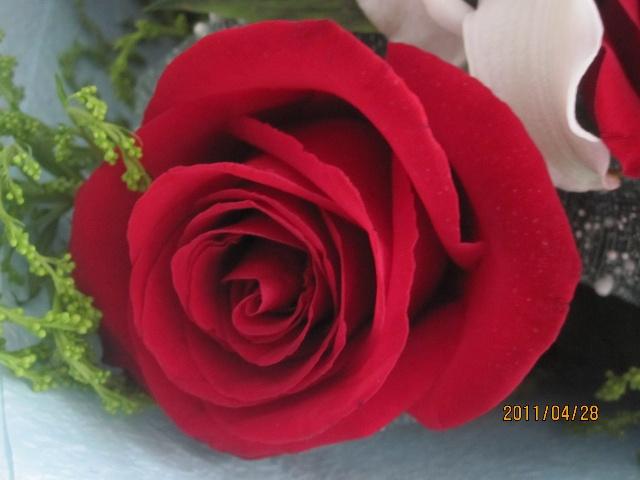 送我一支玫瑰花古筝谱