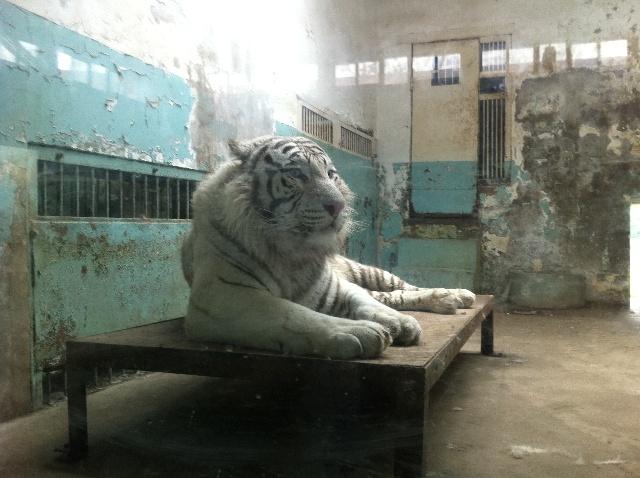 天津动物园一日游