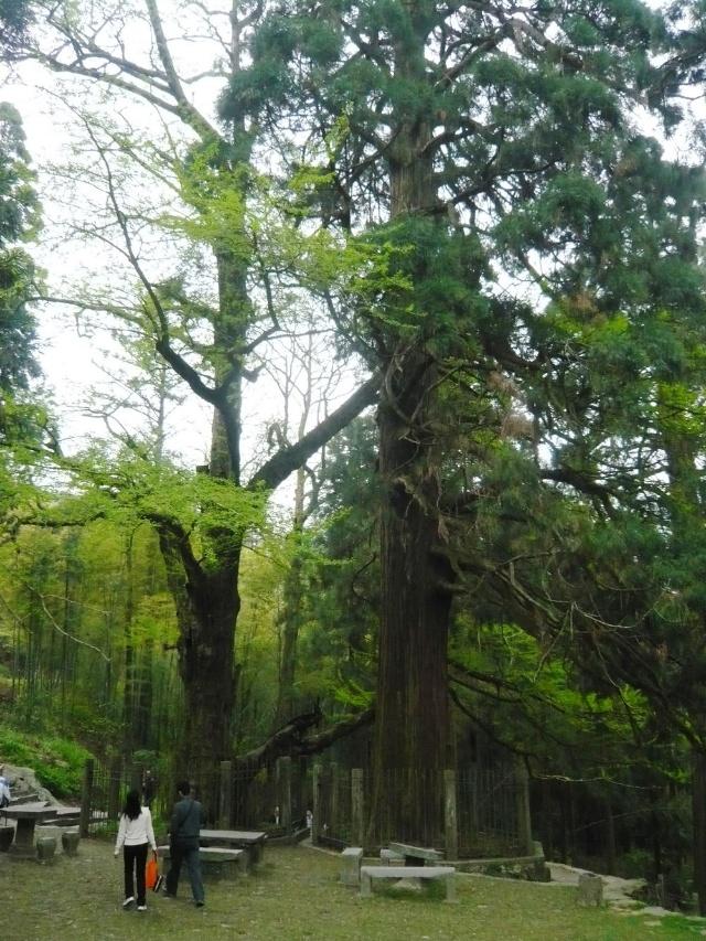 四年级名校第三讲 枚举树 教学目标: 1学会用枚举树解题.