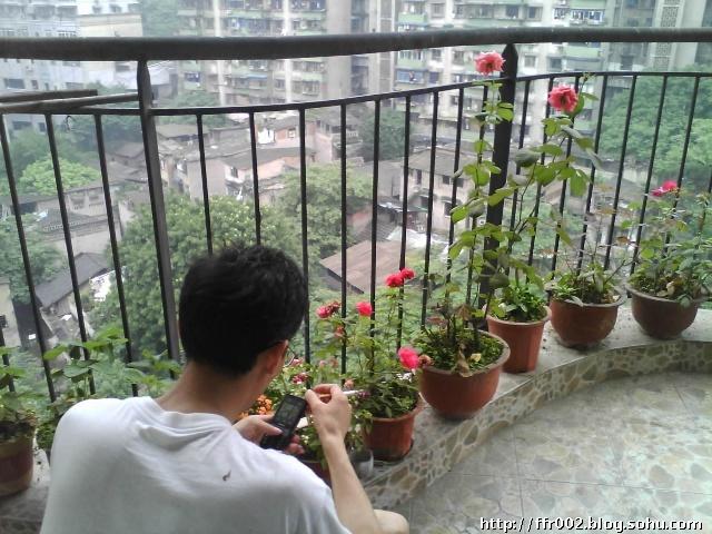 我家阳台风景独好,说的不错吧?