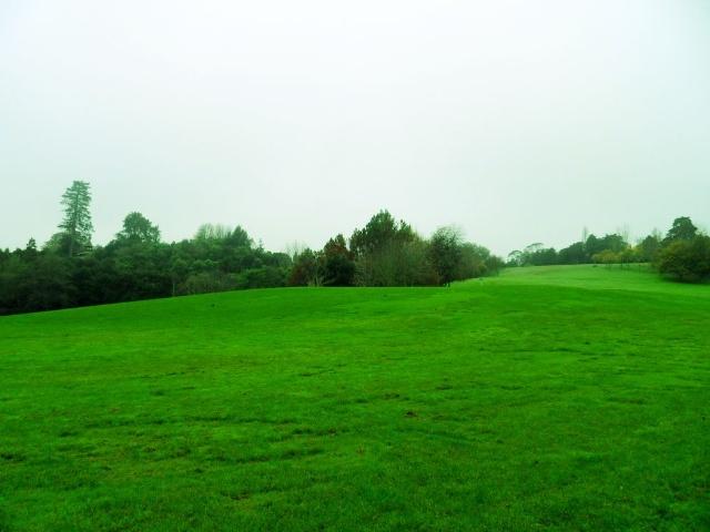 绿色视野开阔风景图片