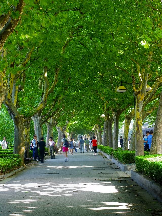 名贵树木;乔木与灌木之比为1∶1,常绿树与落叶树之比为1&