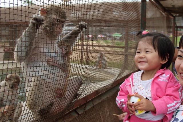 秦皇岛野生动物园-天使爱