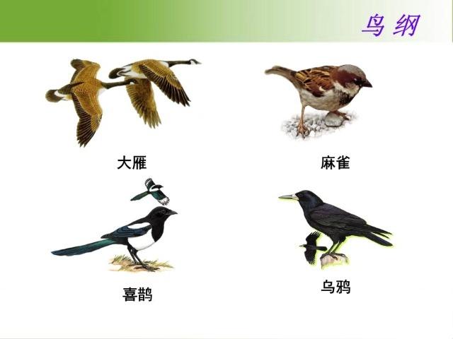 八上16.2动物运动的能量来源