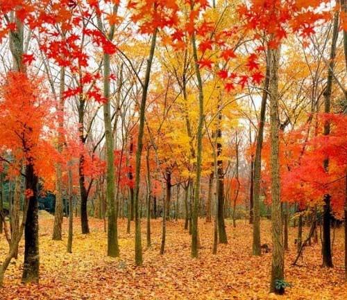 秋天树叶飘落的图片-一叶,难知你秋