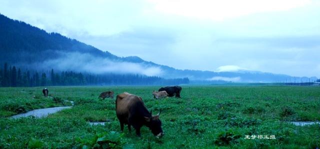 唐布拉的晨曦,我心中的梦境———我们新疆好地方