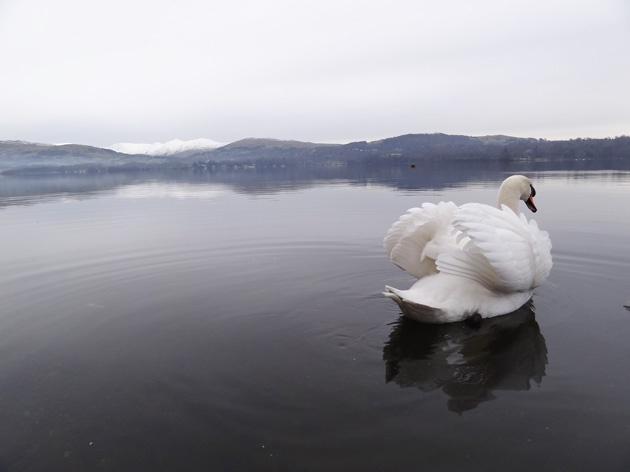 悲伤的动物 湖水きよ