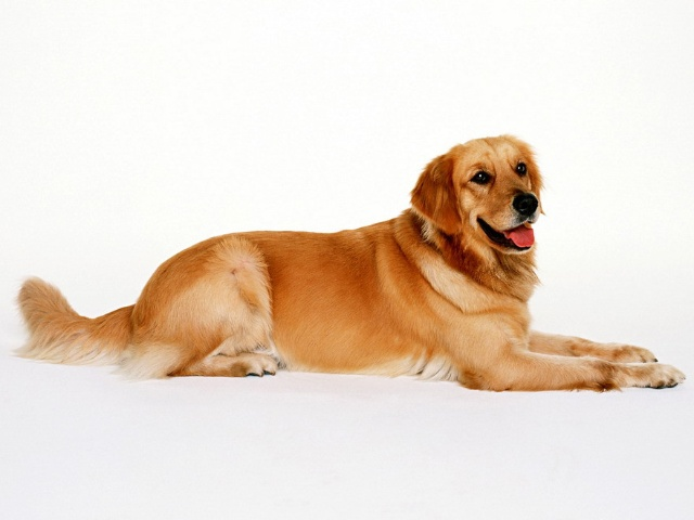 可爱的狗狗-心平气和-搜狐博客