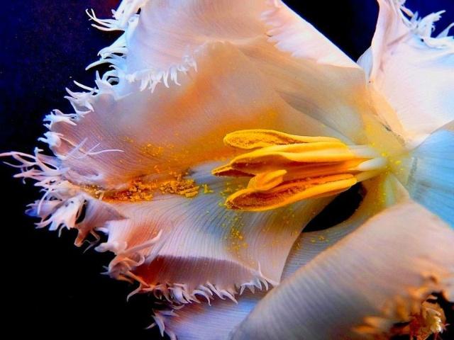 美丽的花蕊-心平气和-搜狐博客