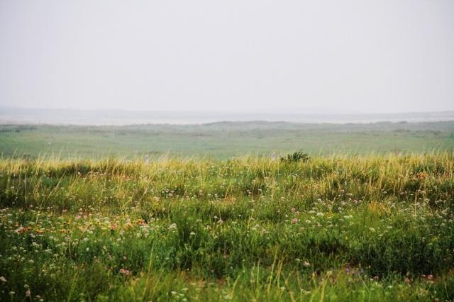 鄂尔多斯草原风景