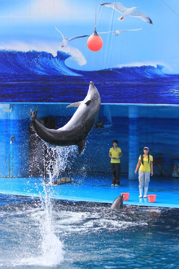 南昌动物园海洋馆之海豚篇(下)