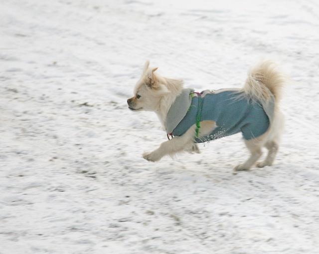 我有一只可爱的小狗舞蹈