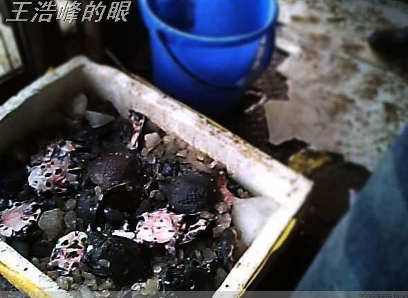 武汉华南水产市场有人做死蟹买卖