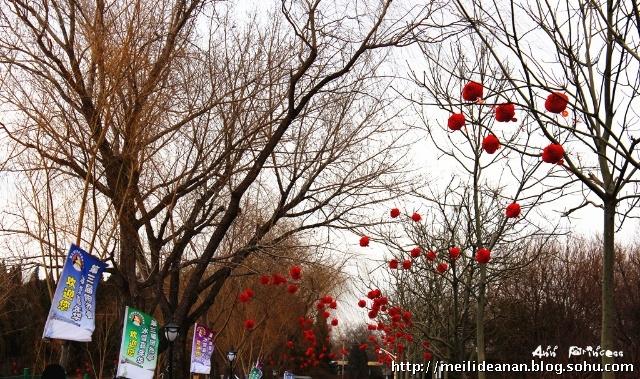 捡起树枝上的一串红灯笼,咱也乐乐