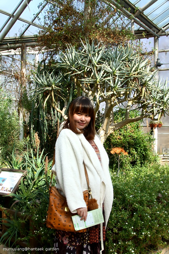 韩宅植物园:小王子和猴面包树
