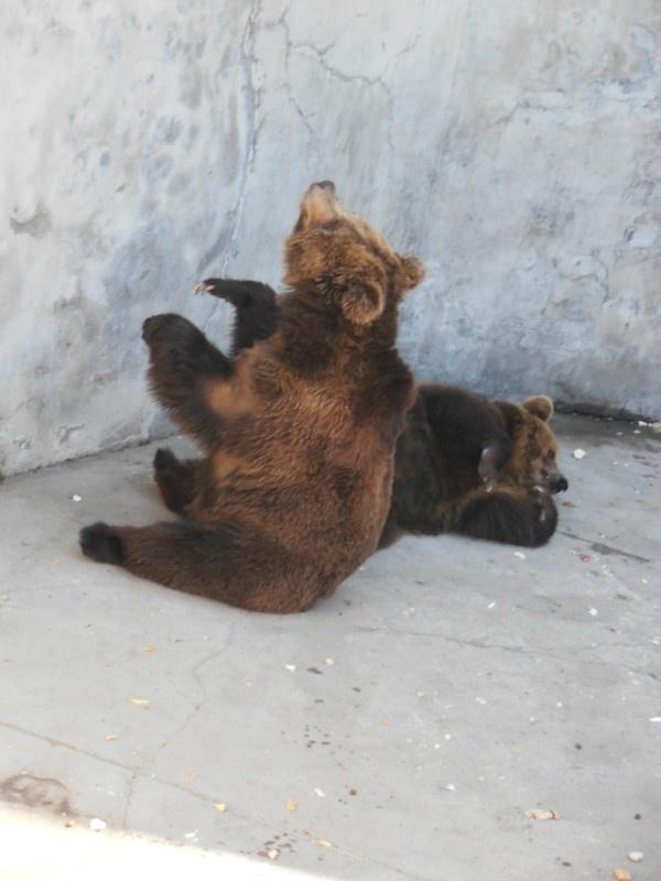 游北京动物园_冰儿菲菲