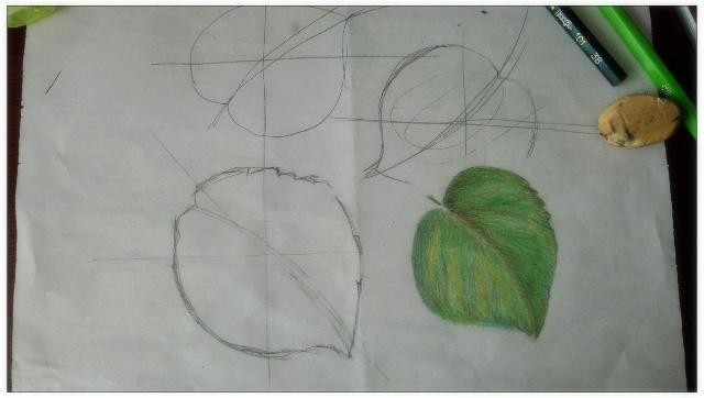 树叶花边边框彩铅