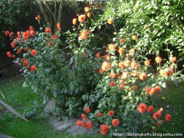 雕刻玫瑰花西红柿摆盘图片 壁纸