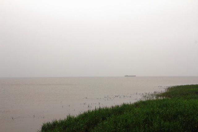 游上海崇明岛西沙湿地公园